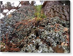 Lichen Tower Acrylic Print by Jean Booth