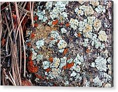 Lichen With Pine Acrylic Print