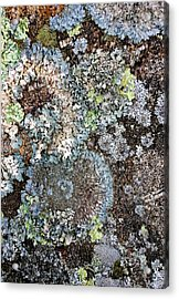 Acrylic Print featuring the digital art Lichens by Julian Perry