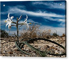 Acrylic Print featuring the photograph Life Amoung The Weeds by Jeremy McKay