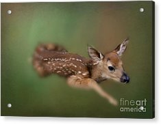 Acrylic Print featuring the photograph Life Begins by Brenda Bostic