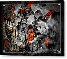 Life Behind The Wire Acrylic Print