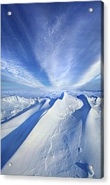 Life Below Zero Acrylic Print by Phil Koch