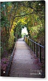 Life Beyond The Path Acrylic Print