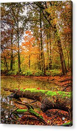 Acrylic Print featuring the photograph Life Cycle by Dmytro Korol