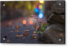 Life Finds A Way Acrylic Print by Mary Almond