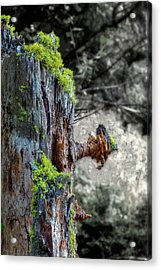 Life From Death Acrylic Print