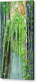 Life In A Redwood Forest Acrylic Print