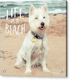 Life Is A Beach Dog Square Acrylic Print by Edward Fielding
