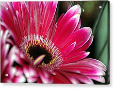 Life Acrylic Print by Jacqueline Lewis