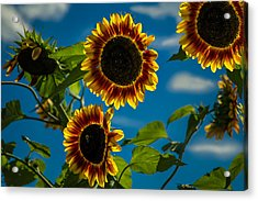 Acrylic Print featuring the photograph Life Of A Bumble Bee by Jason Moynihan