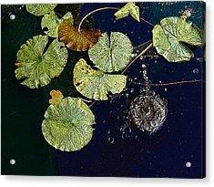Life Of A Lily Pad 3 Acrylic Print by Nicholas J Mast