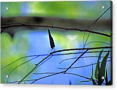 Life On The Edge Acrylic Print