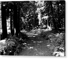 Life Tures  Bw Acrylic Print by Ken Day