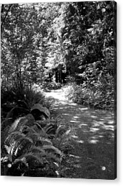 Life Twist And Tures  Bw Acrylic Print by Ken Day