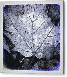 Light After Dark Acrylic Print