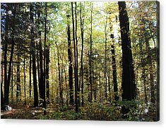 Acrylic Print featuring the photograph Light Among The Trees by Felipe Adan Lerma