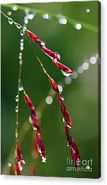 Acrylic Print featuring the photograph Light And Life by Kerri Farley