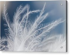 Light As A Feather Acrylic Print