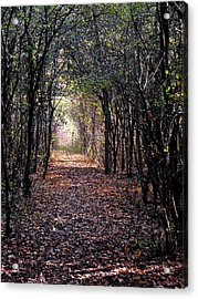 Light At The End Of The Path Acrylic Print by Eva Thomas