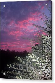 Light Before The Dark Acrylic Print by Warren Thompson