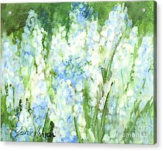 Light Blue Grape Hyacinth. Acrylic Print by Laurie Rohner