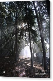 Light Cathedral Acrylic Print
