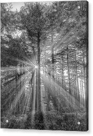 Light Acrylic Print by Naman Imagery