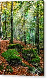 Light In The Forest Acrylic Print by Adrian Evans