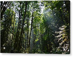 Light In The Forest Acrylic Print