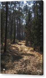 Light In The Wood Acrylic Print