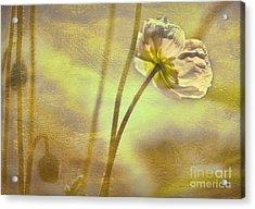Light Lovely Acrylic Print