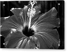Light Acrylic Print by Melissa  Riggs