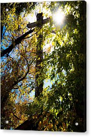 Light Of Day  Acrylic Print by Brittany H