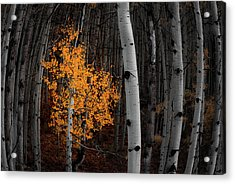 Light Of The Forest Acrylic Print by Darren White