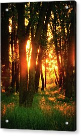 Acrylic Print featuring the photograph Light Of The Forest by John De Bord