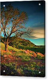 Acrylic Print featuring the photograph Light Of The Hillside by John De Bord