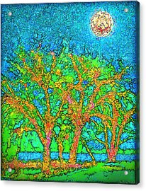 Acrylic Print featuring the digital art Light Of The Radiant Sun - Trees In Boulder County Colorado by Joel Bruce Wallach