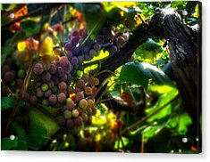 Light On The Fruit Acrylic Print by Greg Mimbs