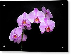 Light On The Purple Please Acrylic Print