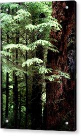 Light On Trees Acrylic Print