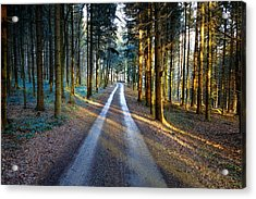 Light Path Crossing In The Woods Acrylic Print