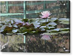 Light Pink Water Lily Acrylic Print by Linda Geiger