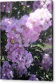 Light Purple Crape Myrtle Flowers Acrylic Print by Warren Thompson