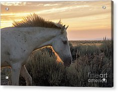Light Shining Through Acrylic Print by Nicole Markmann Nelson