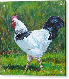 Light Sussex Rooster Acrylic Print by Tomas OMaoldomhnaigh