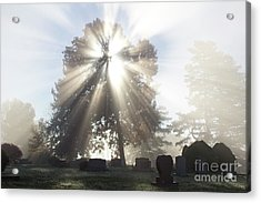 Light Acrylic Print by Tara Lynn