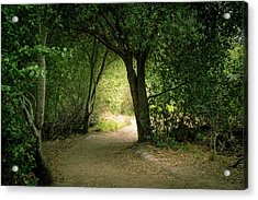 Light Through The Tree Tunnel Acrylic Print