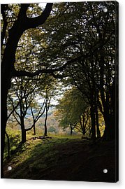 Light Through Woodland Darkness Acrylic Print
