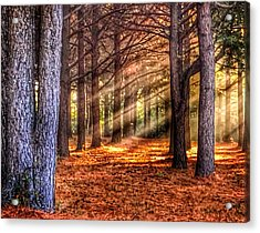 Acrylic Print featuring the photograph Light Thru The Trees by Sumoflam Photography